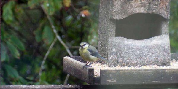 Bird Garden pic 2