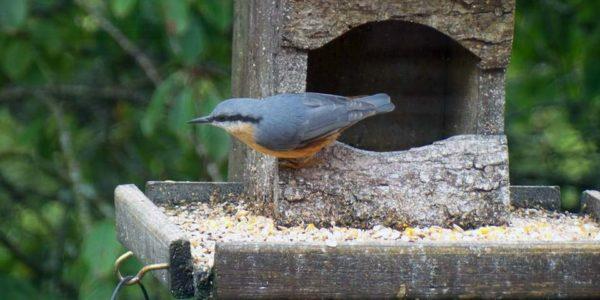 bird-garden-pic3